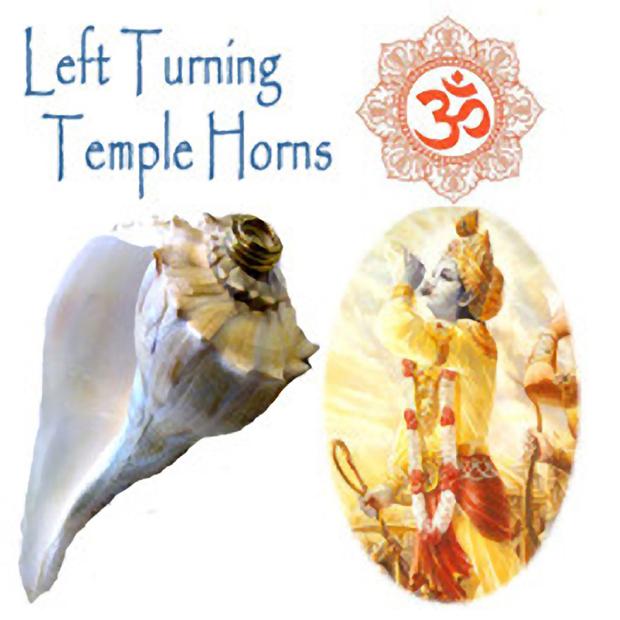 Left Turning Dakshinavarti Shankh Horns Laxshmi Oil Candles Hindu