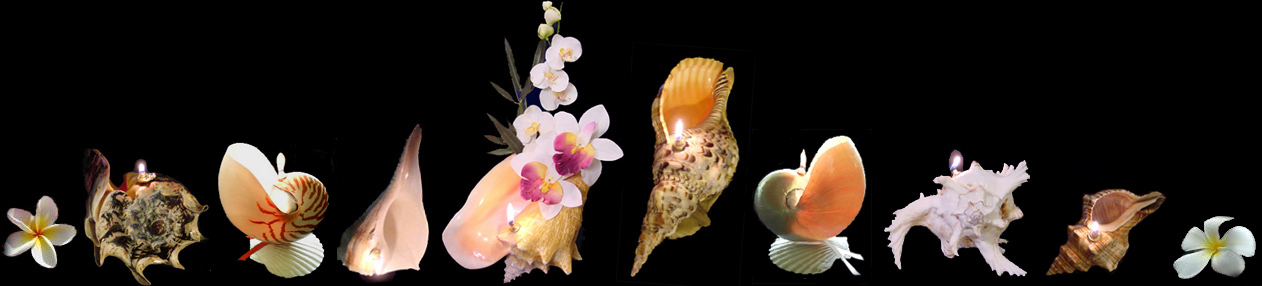 Well-known Seashell Oil Candles, Worlds Only Sea Shell Oil Lamps. Oil Candle  ZX19